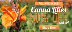 Cannas 50% off  - LOVE their tropical look :)  http://www.hollandbulbfarms.com/items.asp?cat=Canna-Lily-Bulbs&Cc=CANNAS