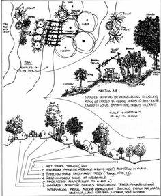 Swale on Hillside Garden Permaculture Design. #livingecology #permacultureinternship