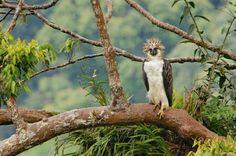Sea parte de la semana del águila de Filipinas. Visite nuestra página y sea parte de nuestra conversación: http://www.namnewsnetwork.org/v3/spanish/index.php