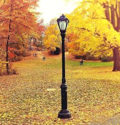 Central Park in fall.