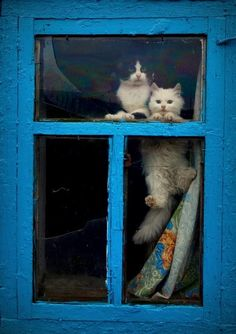 It's a cat. On a window,