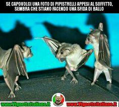 Non è sempre come sembra #vignetteitaliane.it #vignette #italiane #immagini #divertenti #lol #funnypics #umorismo #humour #ridere #risate #pipistrelli