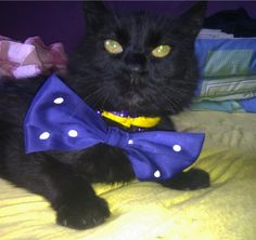 Motanov s girlfriend, Stralucitoarea, wearing his bow tie
