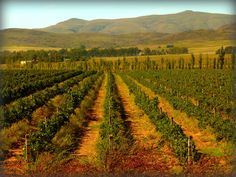 MENDOZA, ARGENTINA — Argentina has built up a world-class wine industry, luring a flood of wine tourists, AFP reports.