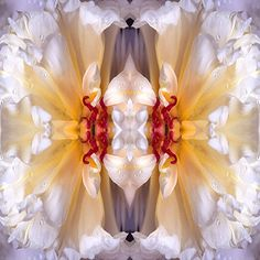 """""""Nothing is so unworthy of a civilized nation as allowing itself to be governed without opposition by an irresponsible clique that has yielded to base instinct.""""  The White Rose (Germany 1942)  Art: organic-mandala #indivisible #government #truth #quotes #inspiration #motivation #action #calltoaction #lifecoach #clarity #confusionends https://www.micheleharveyauthor.com/jhome/"""