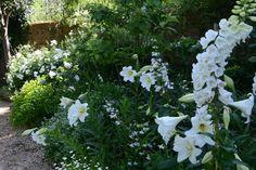 Garden and Home Home And Garden, Gardens, Gallery, Plants, Inspiration, Biblical Inspiration, Roof Rack, Outdoor Gardens, Plant