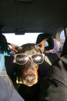 Do you take your pets with you on your travels?