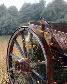 Wagon/wagon wheel/bird/field/flowers
