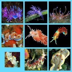 Sea slugs collage 10