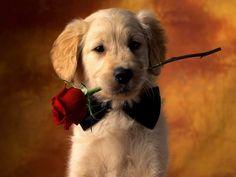Capri Jewelers Arizona ~ www.caprijewelersaz.com <3 A Red Rose From Me To You ♥