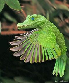 Животные из Фотошопа