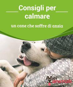Consigli per calmare un cane che soffre di ansia Se siete preoccupati per il vostro animale domestico e desiderate sapere come calmare un cane con ansia, in questo articolo vi spiegheremo come fare.