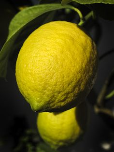 Lemons - Lago di Garda @LagoGardaPoint