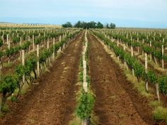 Тужба Кинеза због винограда? - http://www.vaseljenska.com/ekonomija/tuzba-kineza-zbog-vinograda/
