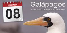 Hotel Solymar Galapagos calendar to see what wildlife is most active during your dates of travel! #galapagos #nature