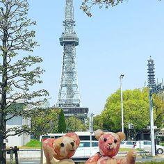 クマちゃんズ、今日のテレビ塔前からこんにちはー🐻  桜はこの位置からは写りませんでした🌸 が、まだ咲いてます❀.(*´◡`*)❀. #名古屋 #名古屋観光 #東亜和裁 #テディベア #春 #くまの桜ちゃん #くまの梅ちゃん #nagoya #ぬい撮り #ぬいぐるみと撮り隊