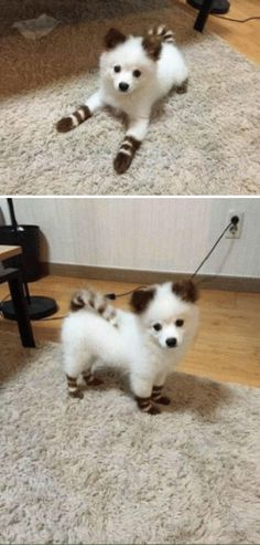 This puppy looks like a rare Pokémon