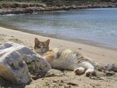 20 Cats Enjoying The Beach