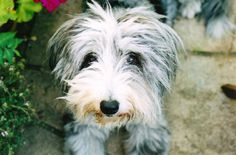 My Mum's dog, Fraggle :)