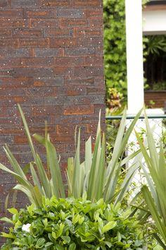 Parede de Tijolinho Cl, Rose, Plants, Facades, Roses, Plant, Planting, Planets