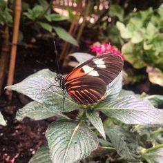 C. Jack @cjack_artist #butterfly @natur...Instagram photo   Websta (Webstagram)