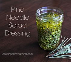 Foraging pine needles and use.