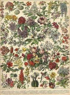 Larousse - Fleur: