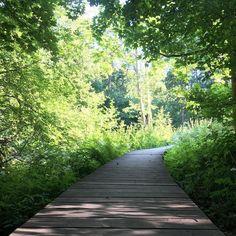 Kesäilta puistossa  #strömberginpuisto #puisto #kesäkaupunki #helsinki #helsingfors #suomi #finland #visitfinland #visithelsinki #summer #summertime #july #heinäkuu #park
