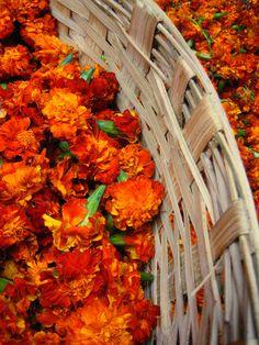 Marigolds for sale in the Phul Bazaar at Buleshwar, Mubai