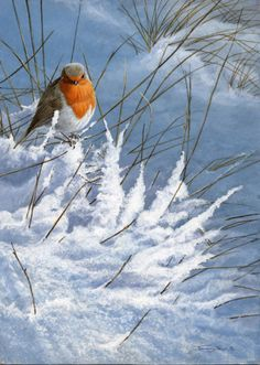 All images are the original artwork of nature artist and wildlife artist Dr. Jeremy Paul and are protected by international copyright laws. All Birds, Little Birds, Robin Bird, Winter Scenery, Snow Scenes, Mundo Animal, Tier Fotos, Christmas Scenes, Wildlife Art