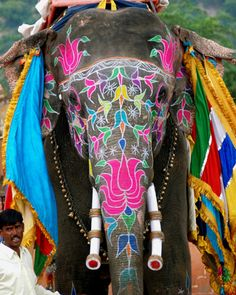 Indian elephant ...i would LOVE to travel somewhere with elephants like this!