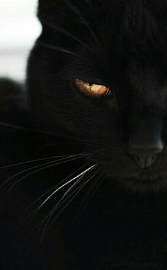 Black cat! One word, gorgeous!!!