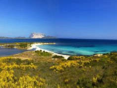 Sardinia #sardinia #sea #colors #nature http://www.en.luxuryholidaysinsardinia.com/case-vacanza-in-sardegna/migliori-case-vacanze.html