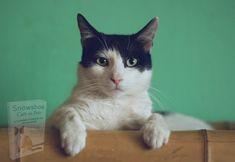 Michael Schulte, Cat Diseases, Owning A Cat, Cat Behavior, Cat Sleeping, High Five, Your Pet, Cat Lovers, Dog Cat