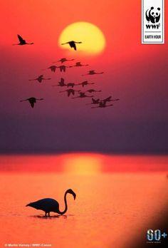 Flamingo sunset pink orange