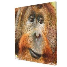 Orangutan portrait canvas print - animal gift ideas animals and pets diy customize