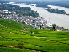 Rudesheim, Germany    Cruised along the Rhine River here and back.  Lots of wineries & grapes growing along the river banks.  1974