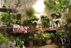 Stunning Paris Florist