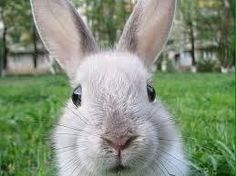 Spirit Animal Meanings and Symbolism – Rabbit, Bunny, and Hare Symbolism, Totem, and Meaning Havanese Grooming, Havanese Puppies, Dogs And Puppies, Puppy Grooming, Rabbit Wallpaper, Apocalypse World, Post Apocalypse, Viajes, People