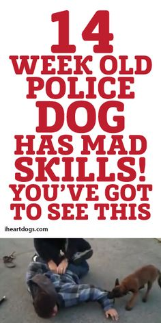 14 Week Old Police Dog Has Mad Skills! You've Got To See This!