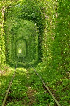 Train tunnels in the Enchanting Forest, Ukraine.