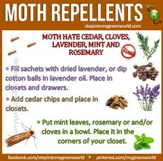☛ May is the beginning of moth season. Spring is when clothes moths start to emerge and start looking for somewhere to mate and lay eggs.  CLOTH MOTH NATURAL ALTERNATIVES:  http://www.stepintomygreenworld.com/healthyliving/around-the-home/moth-repellents/  ✒ Share | Like | Re-pin | Comment