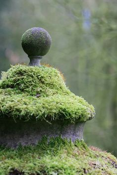 homes, décor, gardens, nature, all things beautiful serene and cozy . Garden Statues, Garden Sculpture, Manor Garden, Moss Garden, Garden Urns, Garden Of Earthly Delights, Covered Garden, Garden Structures, Topiary