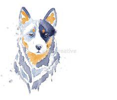 Australian Cattle Dog Blue