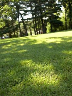 Lots of acreage owners try organic lawn care, but soon they find that going all natural requires more work and expense than they can provide. Garden Leave, Lawn And Garden, Home And Garden, Organic Lawn Care, Lawn Care Tips, Lawn Sprinklers, Country Life, Outdoor Gardens, Sidewalk