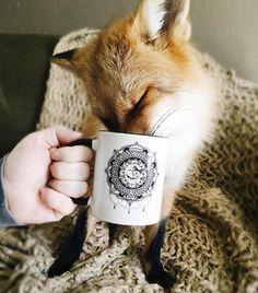 juniper-fox