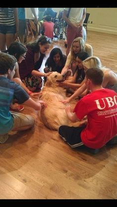 'My university holds a doggy day during finals. I can't tell who enjoys it the most.' #imgur