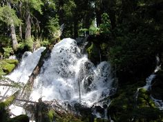 Clearwater Falls, 30-40 foot cascade of white water on N. Umpqua Highway, between Crater Lake and Roseburg, Oregon.