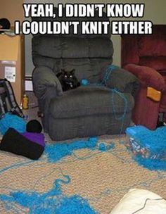 Funny Cats (16 Pics)