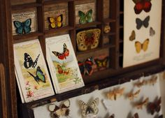 Gorgeous butterfly collection!